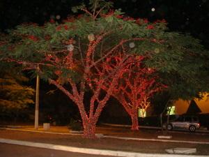 As árvores ganharam luzes e cores